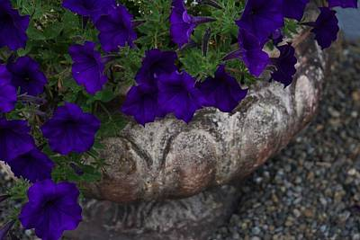 Photograph - Petunias In A Pot by Patricia Strand
