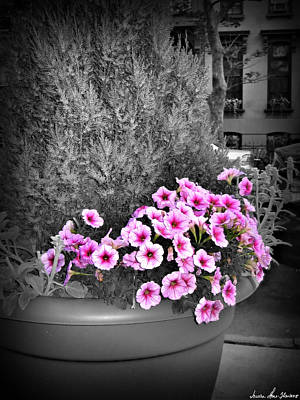 Photograph - Petunias In Brooklyn Circa 2006 by Iowan Stone-Flowers