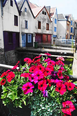 Photograph - Petunias Of Amiens by Therese Alcorn