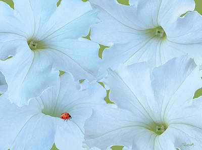 Digital Art - Petunias Petunias by M Spadecaller