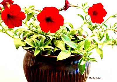 Photograph - Petunias Trios by Marsha Heiken