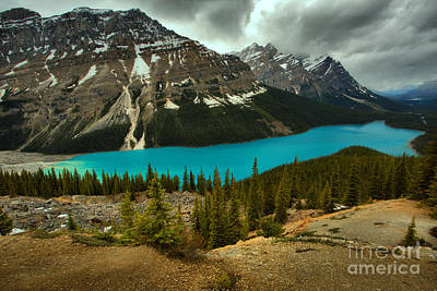 Photograph - Peyto Lake Spring Blues by Adam Jewell
