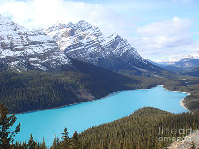 Photograph - Peyto Lake by Wilko Van de Kamp