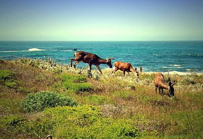 Photograph - Pg Ocean Side Deer Three by Joyce Dickens