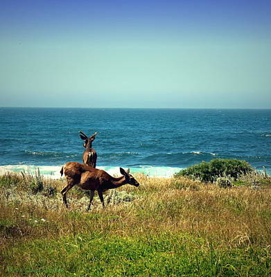 Photograph - Pg Ocean Side Deer Two by Joyce Dickens