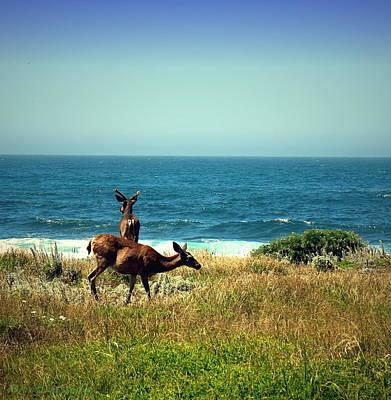 Photograph - Pg Ocean Side Deer Two by Joyce Dickens