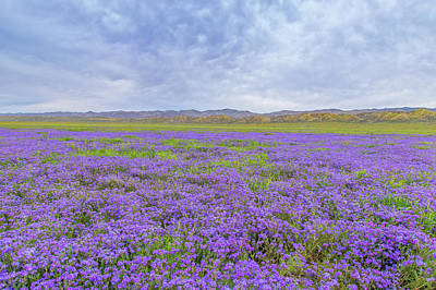 Art Print featuring the photograph Phacelia Field by Marc Crumpler