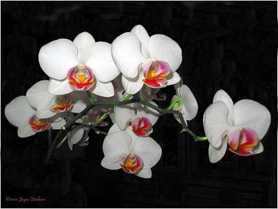 Phalaenopsis Orchids Art Print by Joyce Dickens