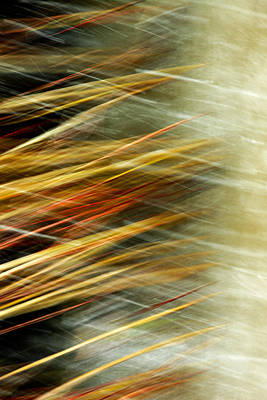 Abstract Movement Photograph - Phalanx by Todd Klassy