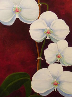 Phaleanopsis Art Print by Anne Marie Brown