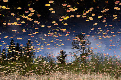 Lily Pad Photograph - Phantom Lake by Alex Levine