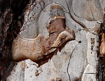 Photograph - Pharaoh - Tree Bark Art by Elena Schaelike