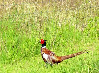Photograph - Pheasant Country by Will Borden