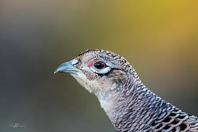 Photograph - Pheasant Hen's Portrait by Torbjorn Swenelius
