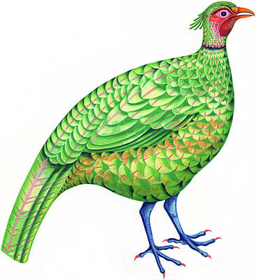 Long Tailed Painting - Pheasant by Jane Tattersfield