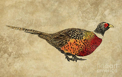 Pheasant Mixed Media - Pheasant On Old Brown Paper by Apostrophe Art