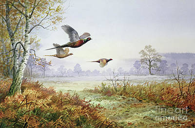 Pheasant Painting - Pheasants In Flight  by Carl Donner