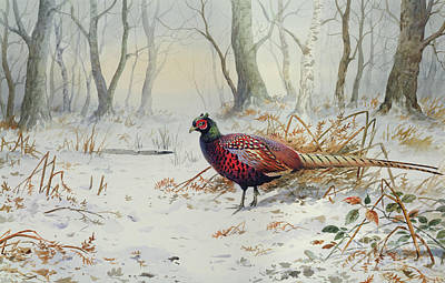 Pheasants In Snow Print by Carl Donner