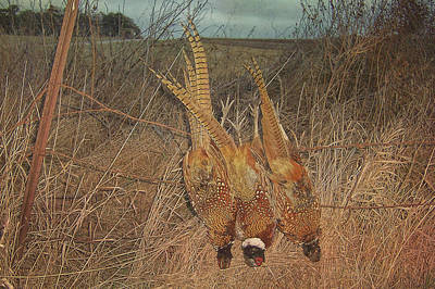 Photograph - Pheasants by JAMART Photography