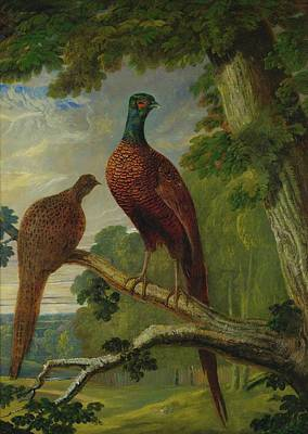 Painting - Pheasants by John Frederick Herring