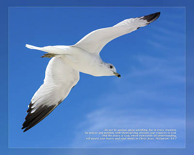 Photograph - Philippians 4 6-7 by Dawn Currie