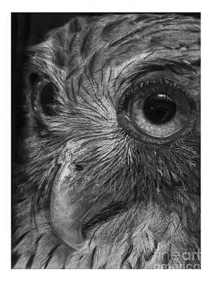 Philippine Eagle Owl Art Print