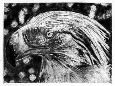 Philippine Eagle Portrait Art Print