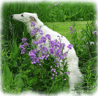 Phlox And Hound Art Print