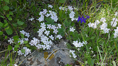 Dainty Daisies - Phlox and Larkspur by Ron Glaser