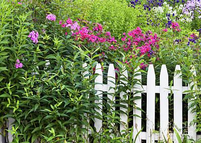 Photograph - Phlox Border Garden by Alan L Graham