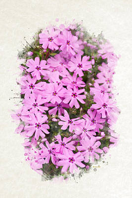 Mixed Media - Phlox Flowers Watercolor Art by Christina Rollo