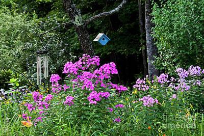Photograph - Phlox Garden Scenic by Alan L Graham