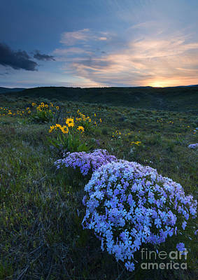 Phlox Photograph - Phlox Sunset by Mike Dawson