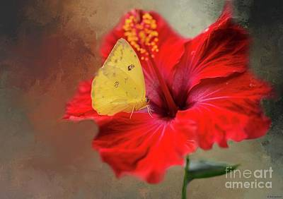 Phoebis Philea On A Hibiscus Art Print by Eva Lechner