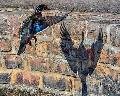 Photograph - Phoenix  by Fiskr Larsen