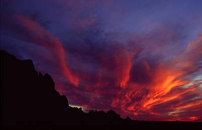 University Of Arizona Photograph - Phoenix Risen by Randy Oberg