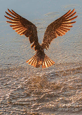 Kootenay Lake Photograph - Phoenix Rising by Joy McAdams