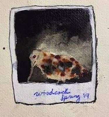 Woodcock Mixed Media - Photo Album - Woodcock Spring '14 by Rachel Calloway
