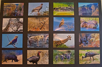 Hager Wall Art - Photograph - Photo Assemblage Of South African Fauna And Scenic Highlights by Ruth Hager