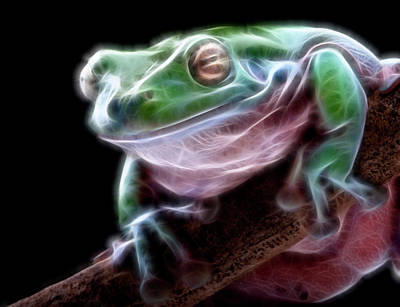 Manipulation Photograph - Photo Manipulation Frog Frog                   by F S
