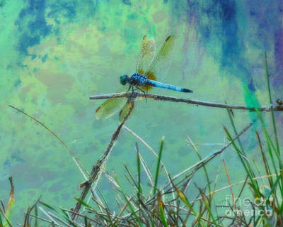 Photograph - Photo Painted Dragonfly by Kathy M Krause
