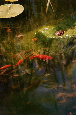 Koi Digital Art - Photo Bomber by Susan Esbensen