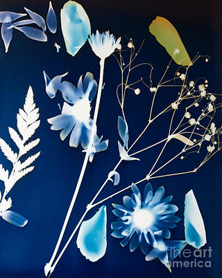 Photograph - Photogram One by Diane Macdonald