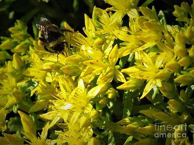 Photograph - Photograph Of A Bee On Yellow Flowers by Delynn Addams