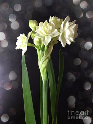 Photograph - Photograph Of Narcissus Erlicheer A White Flower by Delynn Addams