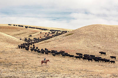 Cattle Drive Photograph - Switchback Trail by Todd Klassy