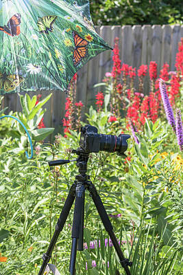 Photograph - Photographing In My Garden by Thomas Young