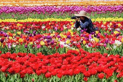 Photograph - Photographing Tulips by Jerry Fornarotto