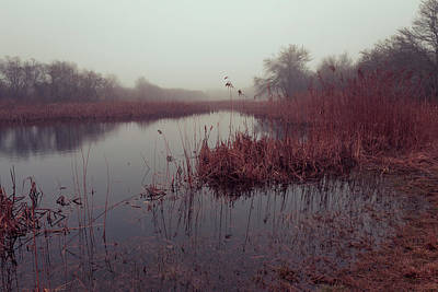 Phragmites And Fog Art Print by Andrew Pacheco