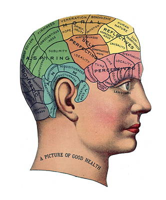 Phrenological Chart Art Print by American School